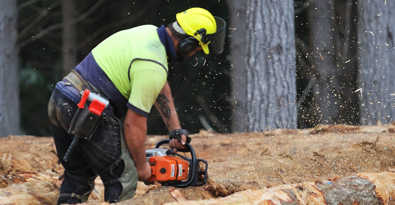 Tenco Logging in NZ forests