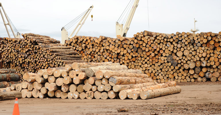 logs waiting to be loaded at NZ port