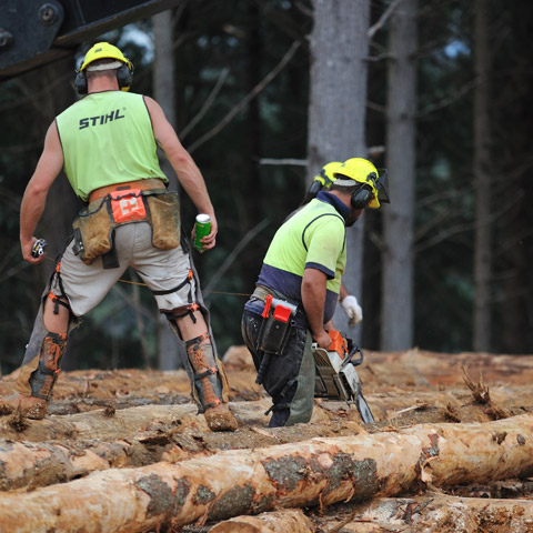 TENCO Forest Products Radiata Pine Logs